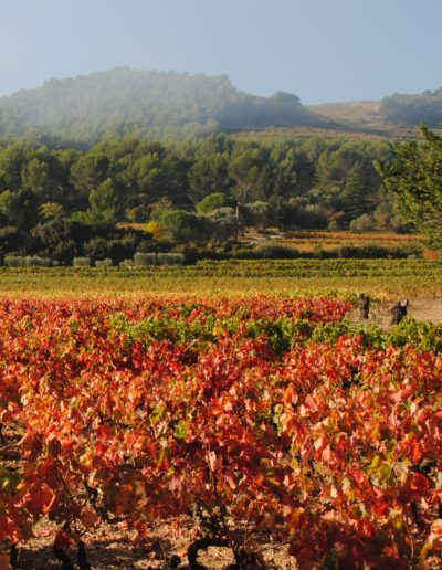 Tours to Provence